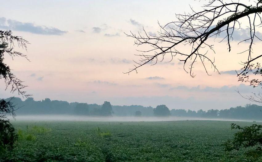 Morning Fog Tree Beauty In Nature Sky Tranquil Scene Rural Scene Agriculture