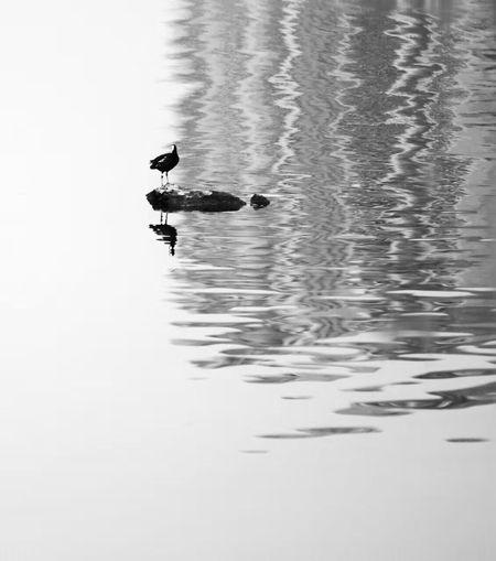 water bird Black&White sandy bay Morn Taking Photos