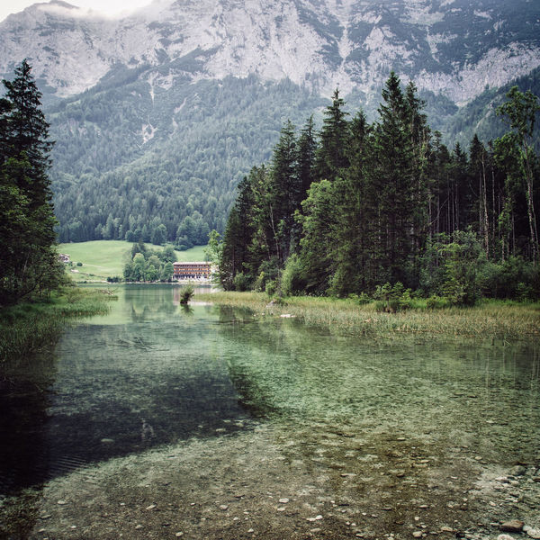 Hintersee Berchtesgaden Hintersee Animal Themes Beauty In Nature Berchtesgaden Day Forest Grass Landscape Lush Foliage Mammal Mountain Mountain Range Nature No People Outdoors Pine Tree Scenics Sky Tranquil Scene Tranquility Tree Water