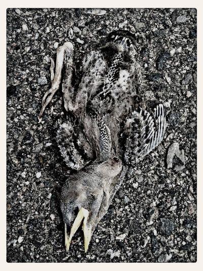 Nature Blackandwhite Dead Birds