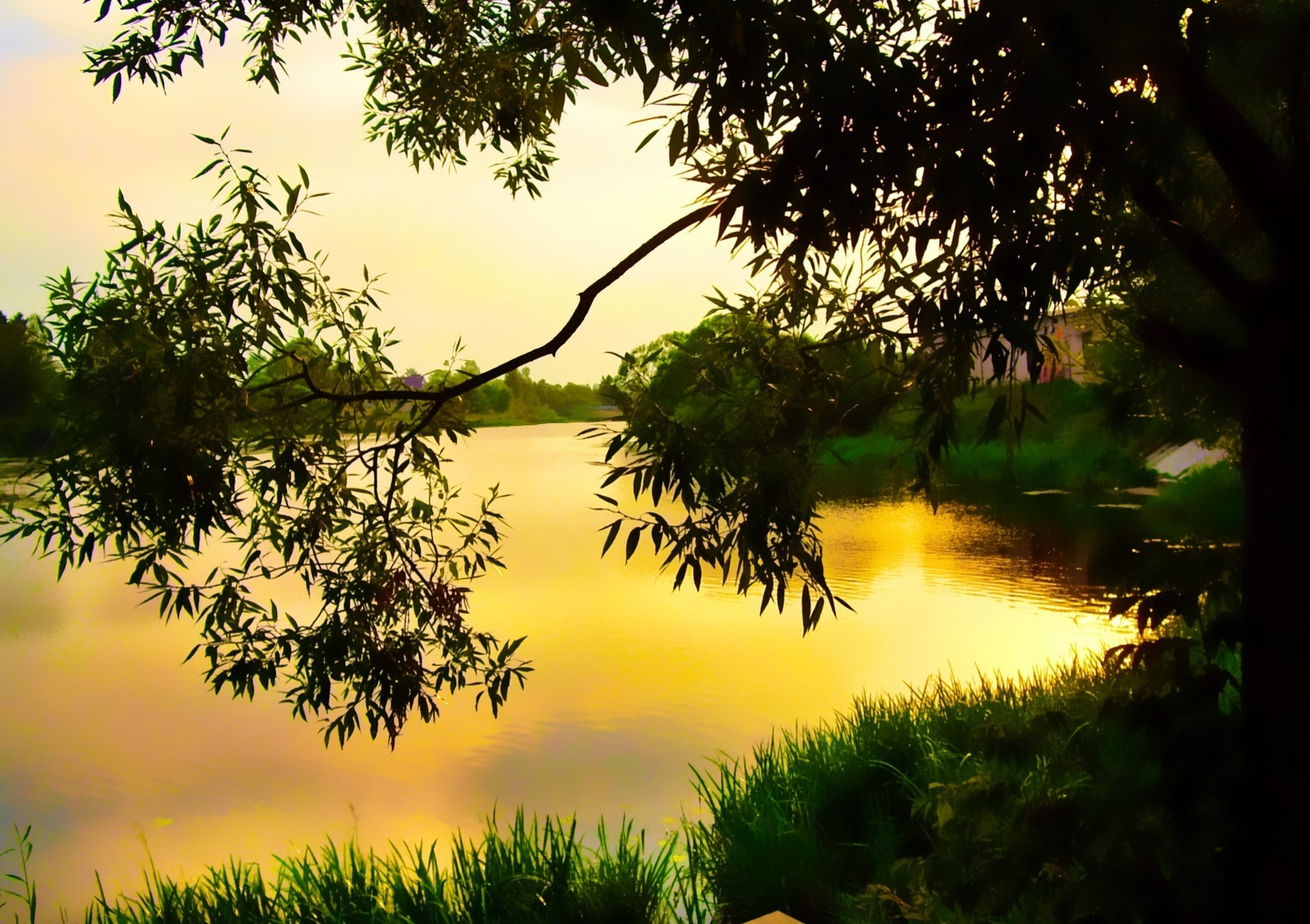 sunset, tranquility, tranquil scene, water, tree, scenics, lake, beauty in nature, reflection, silhouette, nature, sky, growth, idyllic, branch, plant, sun, majestic, outdoors, no people