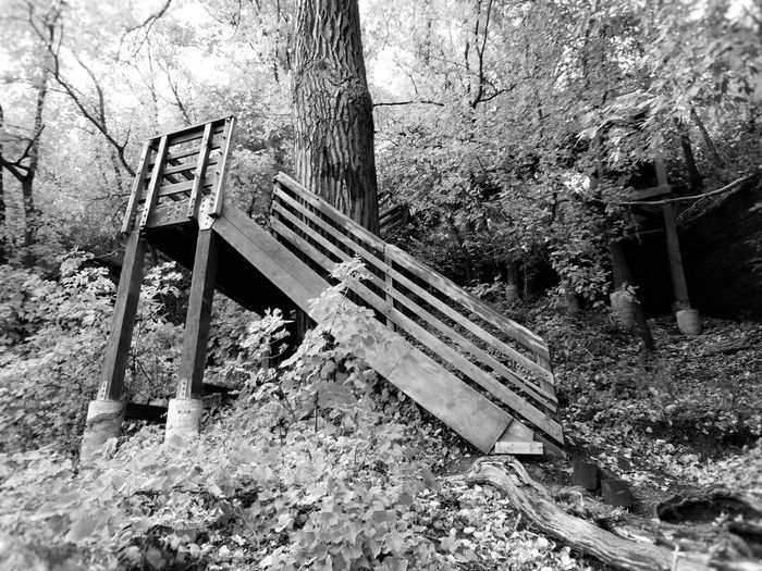 St. Anthony Main trails in Minneapolis MN Black & White Black And White Black And White Collection  Black And White Photography Black And White Portrait Day Fall Nature No People Outdoors Tabphotography Tree Wood Wood - Material Perspectives On Nature