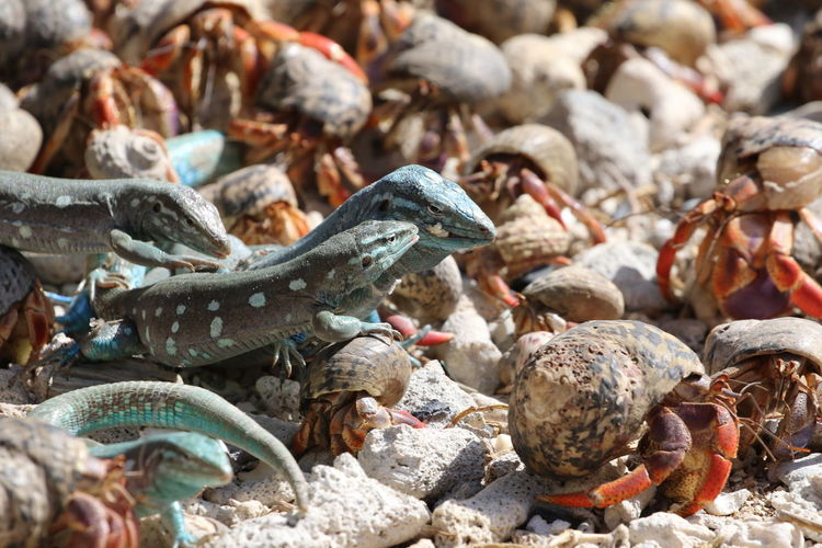 Close-up of crabs and lizards on beach