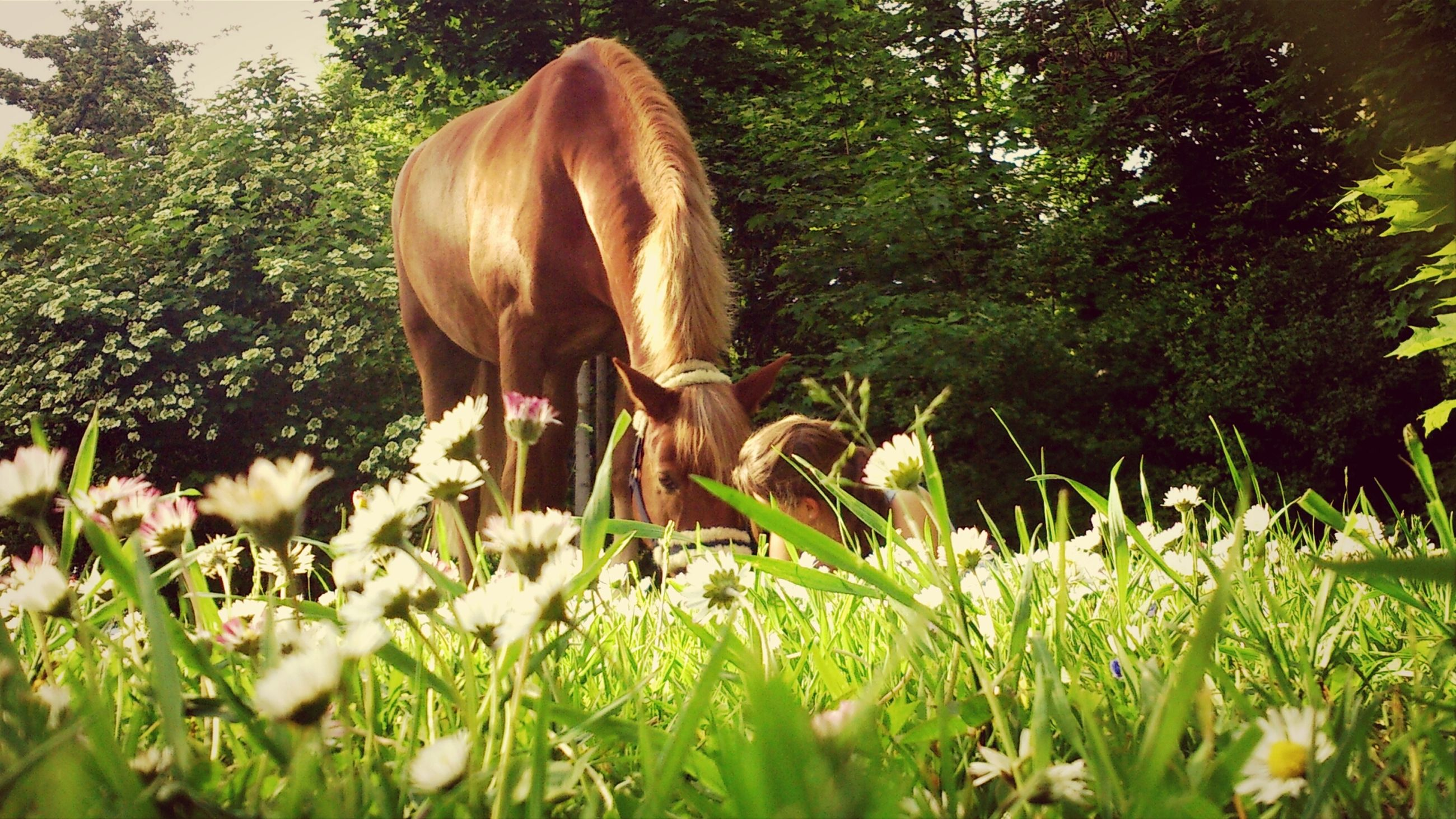 animal themes, one animal, mammal, grass, horse, domestic animals, field, animals in the wild, plant, livestock, wildlife, growth, tree, nature, side view, green color, standing, full length, outdoors, herbivorous