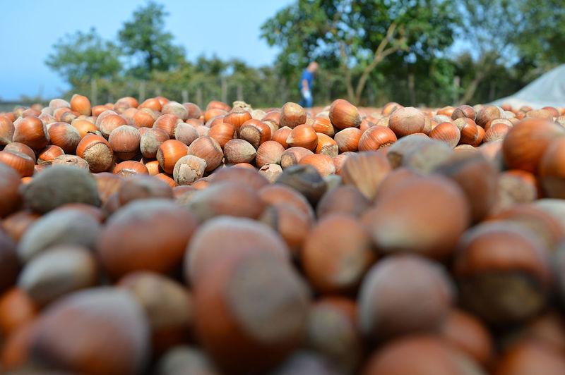 Close-up of hazelnuts