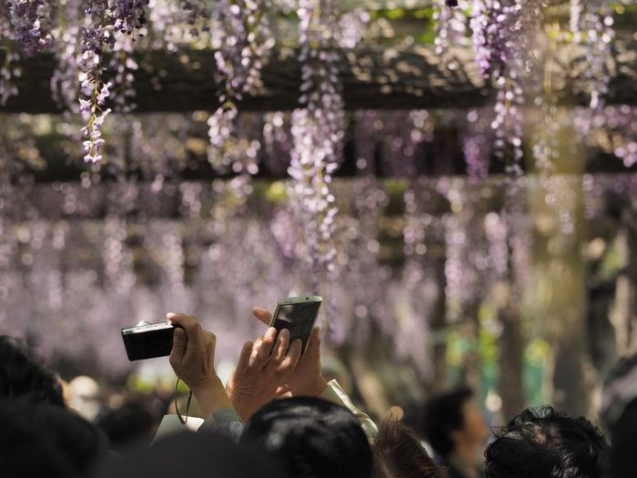 Close-up of hands photographing flowers