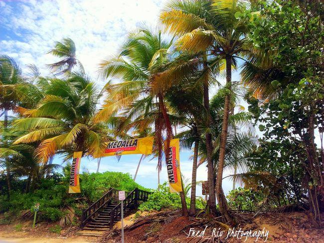 Island Life MedallaLight Islandlife - Islandview Palmeras Piñones!