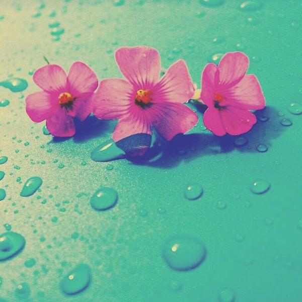 気持ち晴れるかな。 Flowernature First Eyeem Photo
