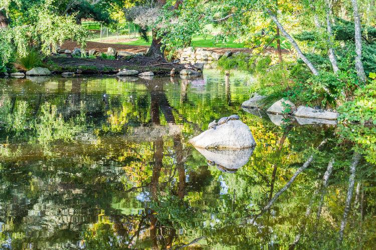 A pond reflects