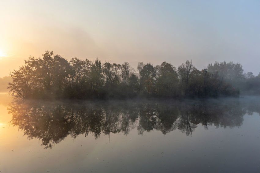 misty autumn morning Tree Tranquility Water Reflection Tranquil Scene Beauty In Nature Plant Sky Scenics - Nature Lake Fog No People Idyllic Nature Waterfront Non-urban Scene Sunset Day Outdoors Reflection Lake Hazy