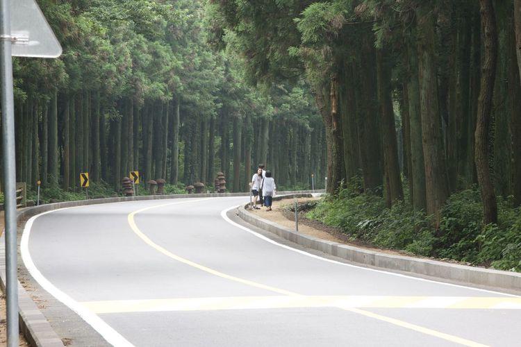 Beauty In Nature EyeEm Best Shots EyeEm Nature Lover Korea Photos Nature Road Taking Photos Tree