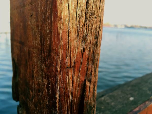 EyeEm Selects Tree Trunk Nature Wood - Material No People Outdoors Day Focus On Foreground Close-up Sea Tree Textured  Horizon Over Water Beauty In Nature Water Sky Wallpaper Photography Nature Photography Wood Texture Wood And Water EyeEmNewHere The Week On EyeEm