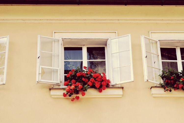 Flowers on window of building
