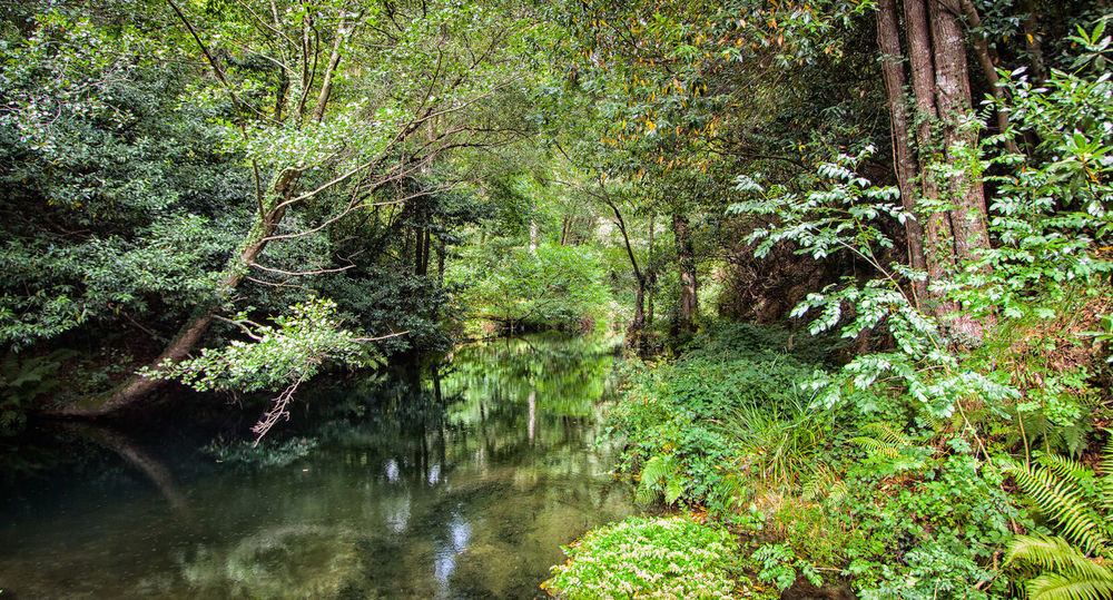 Grass Backgrounds Full Frame Outdoors High Angle View Water Tree Beauty In Nature No People Growth Nature Tranquility Scenics Jungle PlantsVacations Destination Forest Tree Jungle River River Water Reflections