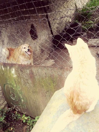 Day Outdoors Animal Themes Nature Dog❤ Cat♡