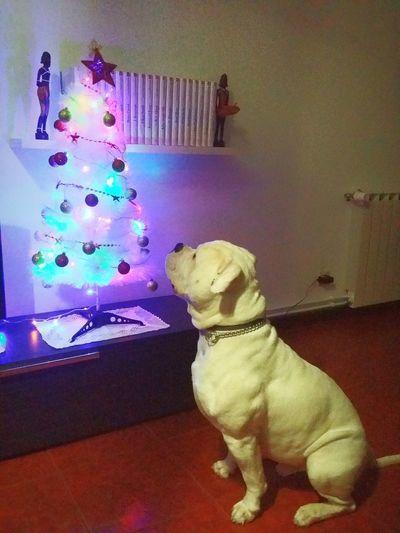 Christmas Tree Christmas Lights Best Friends First Eyeem Photo Christmastime