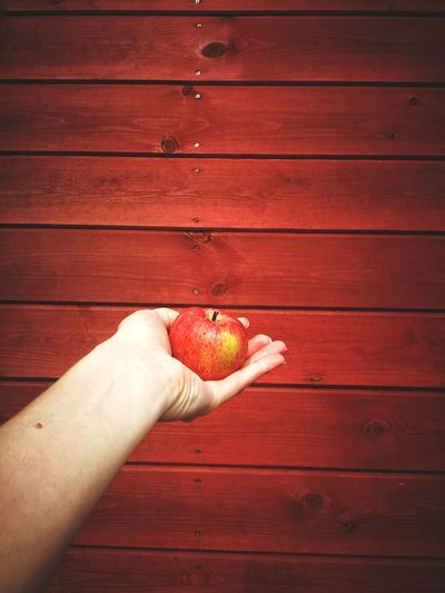 Low angle view of hand holding apple