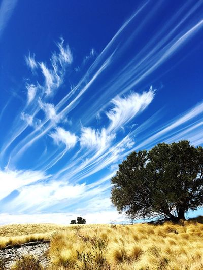 Windswept skies II Sky Nature Landscape Blue Tranquil Scene Beauty In Nature Scenics Day Grass Tree Tranquility Outdoors Mammal No People Animal Themes Travel Destinations Waikoloa Hawaii
