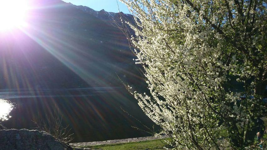 Sun Sunshine Water Lake Nature Flowers
