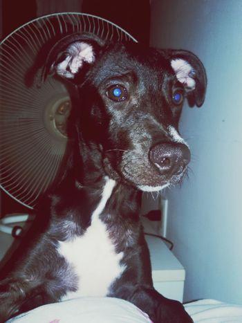 Mamai, quero chocolate! I Love My Dog MinhaDraga Betina Playing With The Animals