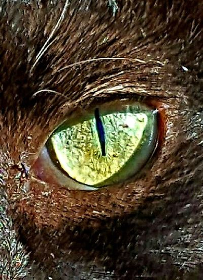 Close-up Extreme Close-up Nature Animal Eye Day Extreme Close Up Full Frame Green Color No People My Feral Cat Close-up Extreme Close-up Nature Animal Eye Day Extreme Close Up Full Frame Green Color No People Rocky Neon Life
