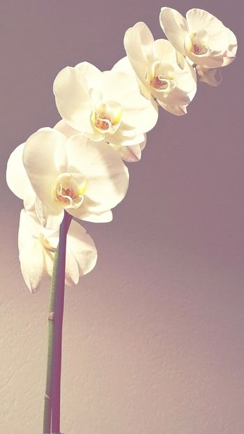 Orchid Orchidee Flowers Fiori Beauty Decadence Life Delicate Beauty