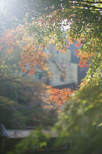 Autumn trees against plants