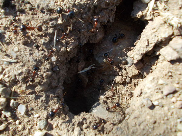 Sunny day Ant Hole Ant Holes Ants Ants Feasting Ants Nest Ants On The Dirt Ants On The Go! Beauty In Nature Burgas, Bulgaria Bułgaria Day Elevated View Nature No People Non-urban Scene Outdoors Rock Rock - Object Rock Formation Shore Stone - Object Tourism Tranquil Scene Tranquility Water