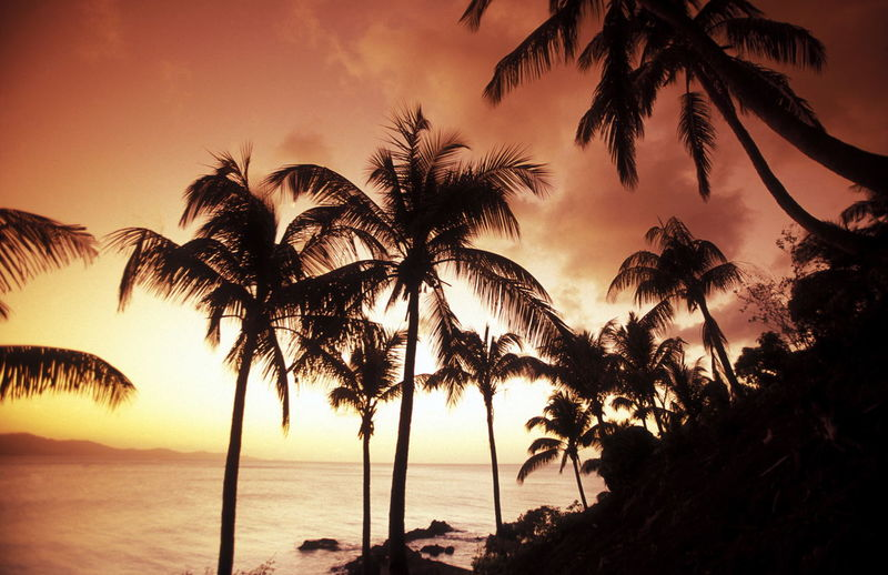 Silhouette Palm Trees Growing On Beach Against Sea And Cloudy Sky During Sunset