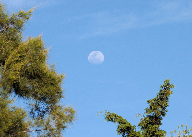 something seems to be missing here - Oh yeah - the night Astronomy Beauty In Nature Blue Centered Object Clear Sky Day Growth Low Angle View Moon Moon In The Daytime Nature No People Outdoors Scenics Sky Tranquil Scene Tranquility Tree