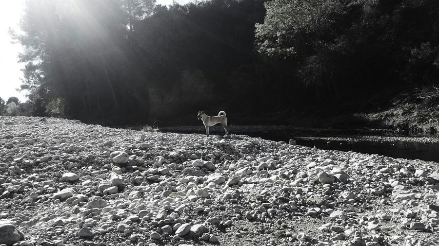 Nature_collection Dogs Black And White Eyeemnaturelover Beautiful
