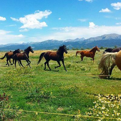 Breathtaking. Stampede Horses Morgans Tetonvalley Onlyinidaho Idahogram Farmlife Ranch CountryLivinG Lovewhereyoulive Idaho Home Horsesofinstagram