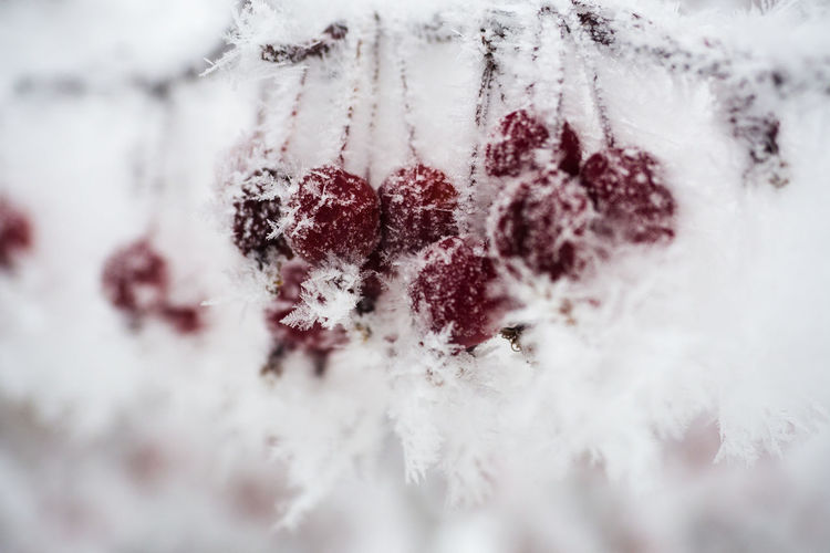 Close-up of frozen fruits
