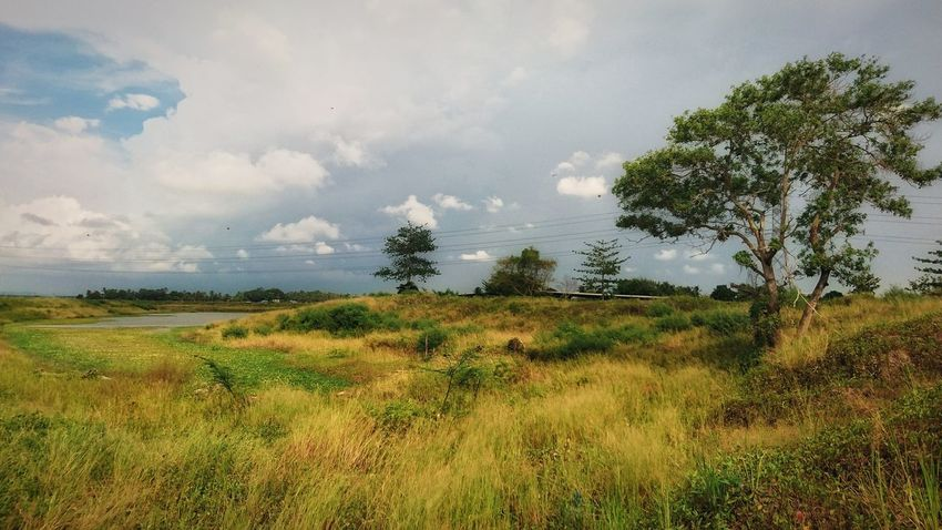 Tree Nature Field Grass Storm Cloud Rice Paddy At Alor Setar Malaysia Sony Xperia Z5 Beauty In Nature
