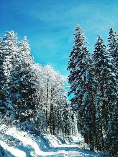 Winter Hochschwarzwald Wald Hiking