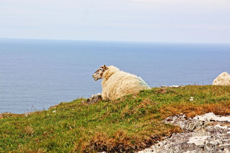 Beauty In Nature Hiking Hiking Trail Idyllic Scenery Ireland Nature No People Outdoors Relax Sheep Tranquility