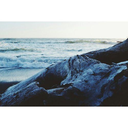Driftwood Lapushwa Rialtobeach PNW Thegreatpnw Washingtonstate Beach Waves Vscocam VSCO Nikond3200