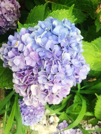 Nature Flower Purple