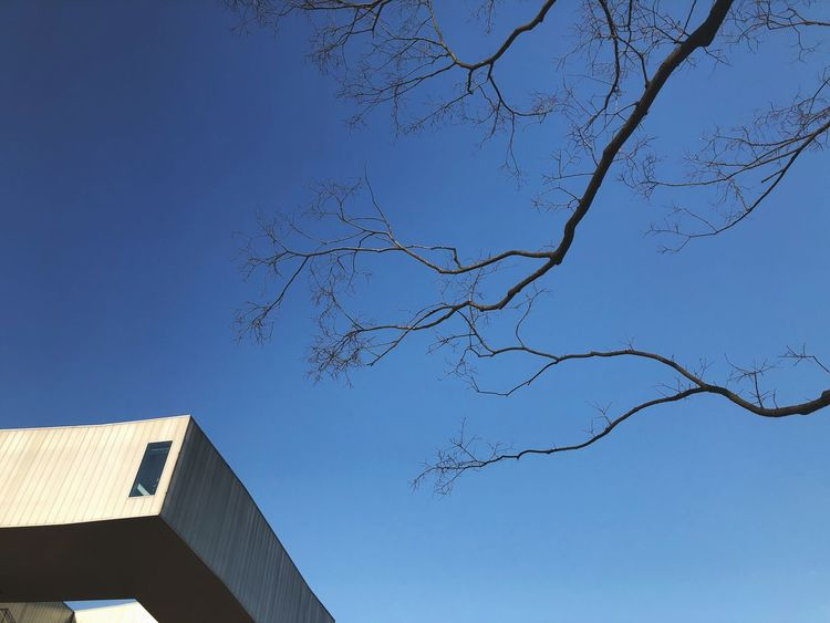 Architecture Bare Tree Built Structure Low Angle View No People Clear Sky Blue