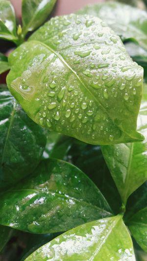 Coffee. .. Green Greenplants Coffee