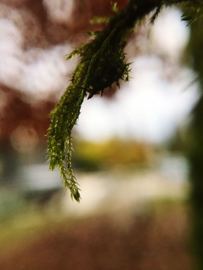 Moss Extreme Close-up Mobile Photography Autumn Colors Nature Close-up No People Plant Outdoors Day Beauty In Nature Macro Photography