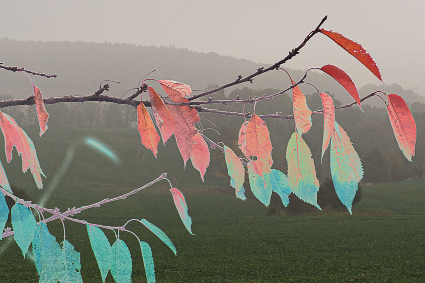 Trying to fresh up the autumn colors Autumn Autumn Colors Branches And Leaves Colorful Day Landscape Leaves Montage Photography No People Outdoors Photoshopped Reverse