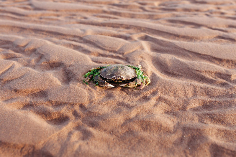 Animal Themes Animals In The Wild Atlantic Atlantic Ocean Beach Canada Close-up Crab Day Hermit Crab Nature Nature No People One Animal Outdoors Pattern Prince Edward Island Sand