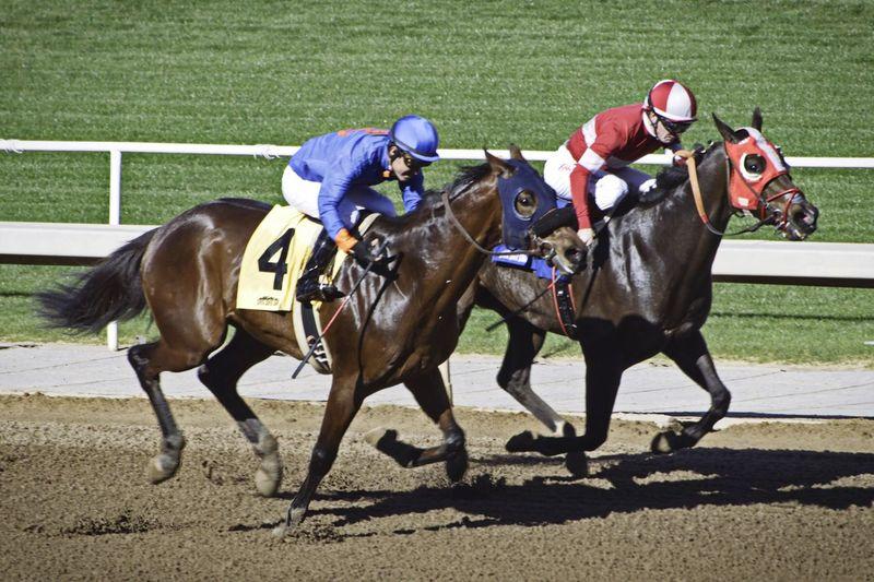 Santa Anita D5500 Horse Competition Domestic Animals Jockey Running Sport Horseback Riding