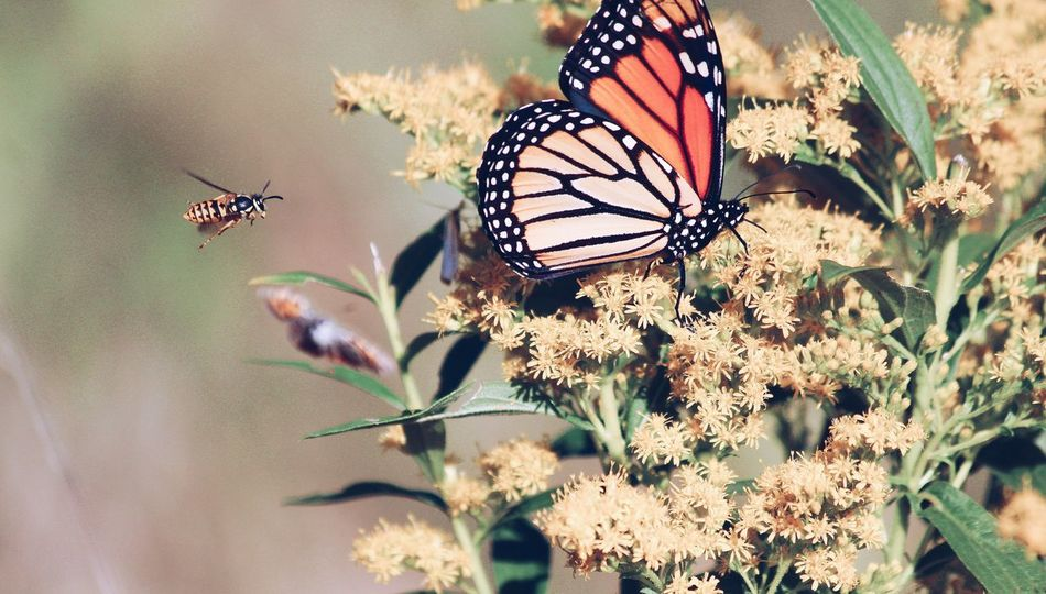 Butterfly & Bee Butterfly Collection Insect Animal Wildlife Invertebrate Animal Themes Animals In The Wild Animal One Animal