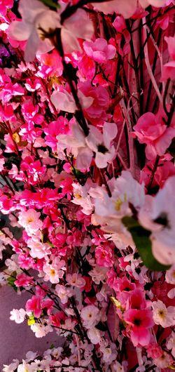 Flower Flower Head Backgrounds Leaf Full Frame Pink Color Petal Tree Blossom Close-up