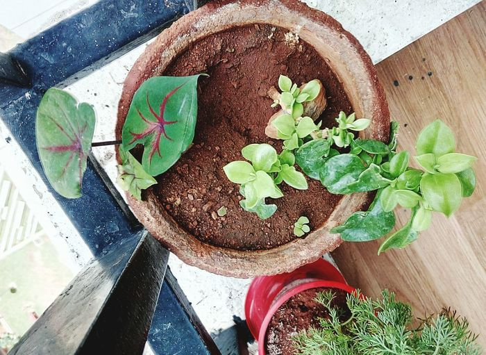 High Angle View Plant Growth Potted Plant No People Day Table Leaf Outdoors MyHOUSE Hobbyphotography Sunlight Nature Herb Close-up