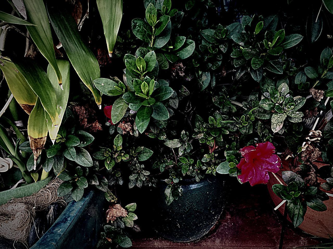 plant, growth, beauty in nature, plant part, leaf, flower, nature, flowering plant, green color, no people, freshness, high angle view, fragility, vulnerability, day, outdoors, potted plant, tranquility, flower head, close-up