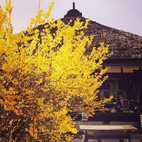 FUKUSHIMA Old Japanese Style 大内宿 茅葺き屋根 古民家
