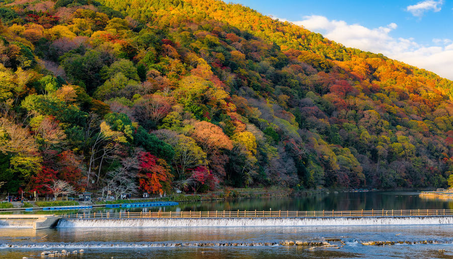 Water Autumn Tree Plant Change Lake Beauty In Nature Nature Scenics - Nature No People Day Tranquility Non-urban Scene Tranquil Scene Waterfront Mountain Growth Reflection Sky Outdoors Autumn Collection Japan Kyoto Arashiyama Autumn